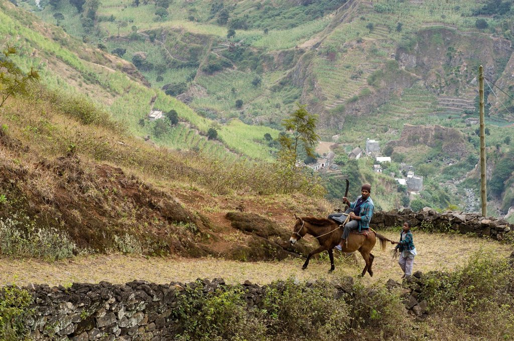 Cape Verde, Santo Antao island, a man holding a machete and a child go back up on horseback towards Cova with a mule : Stock Photo