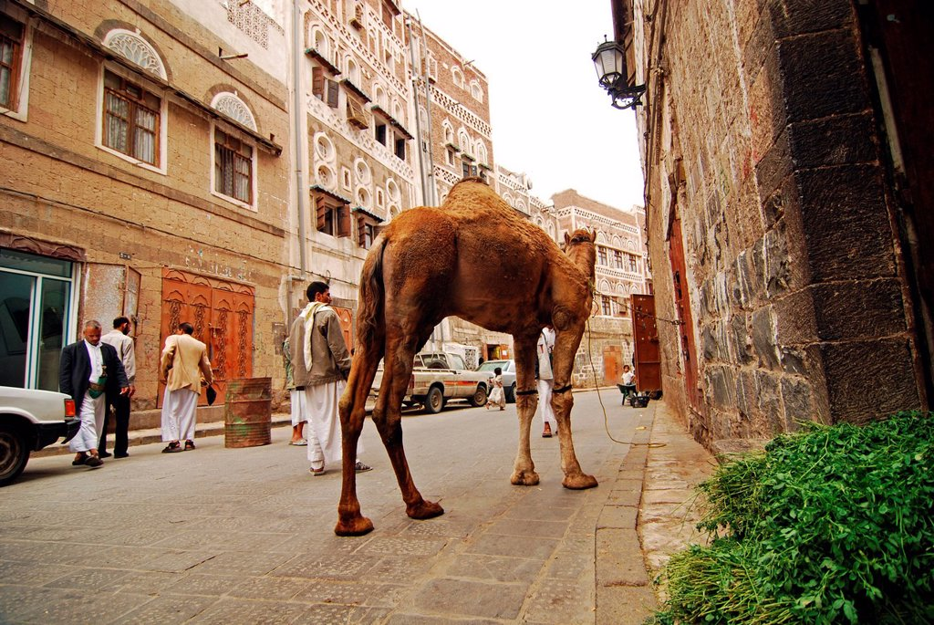 Yemen, Sanaa, old town listed as World Heritage by UNESCO, people walking on street with camel : Stock Photo