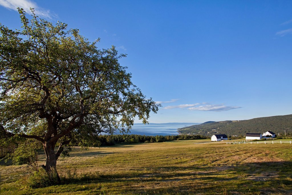 Stock Photo: 1792-152854 Canada, Quebec province, Charlevoix region, St Lawrence river raod, St Irenee and its magnificent view, isolated tree, field and traditional farm