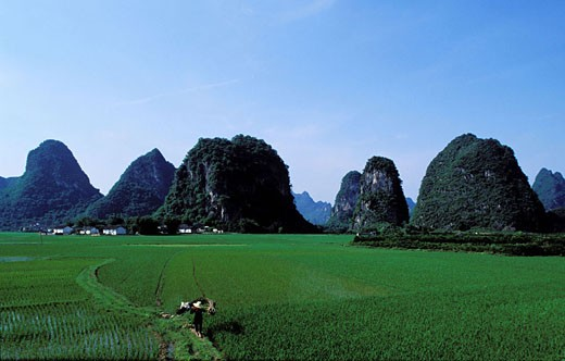 China, province of Guangxi, Guilin, rice fields and mounts around Yangshuo village : Stock Photo