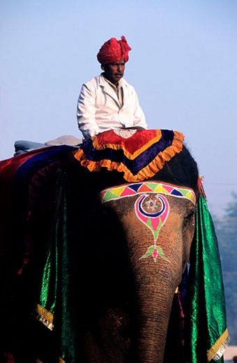 Stock Photo: 1792-35609 India, Rajasthan, Jaipur, elephant