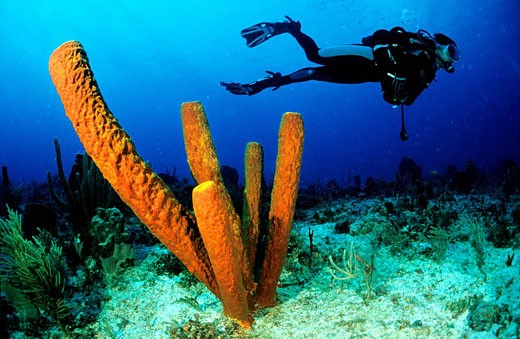 France, Guadeloupe French West Indies, underwater view : Stock Photo