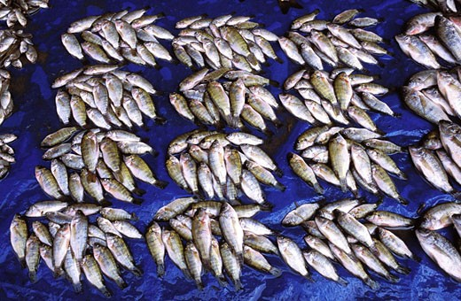 Madagascar, Central Highlands, Antsirabe (ancient spa town), fishes for sale on the market : Stock Photo