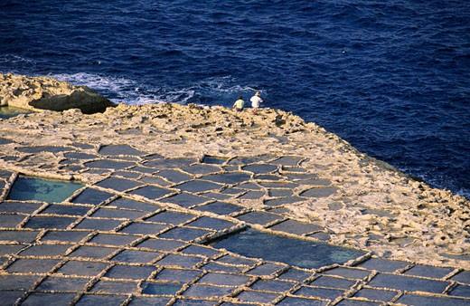 Stock Photo: 1792-50426 Malta, Gozo Island, saltworks of Gozo