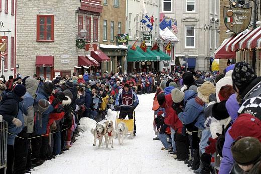 Canada, Quebec, Quebec city Winter carnival, dog sledding in Saint-Louis street : Stock Photo