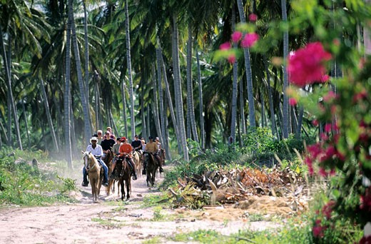 Dominican Republic, Punta Cana, Bavaro, horse riding in a coconut forest : Stock Photo