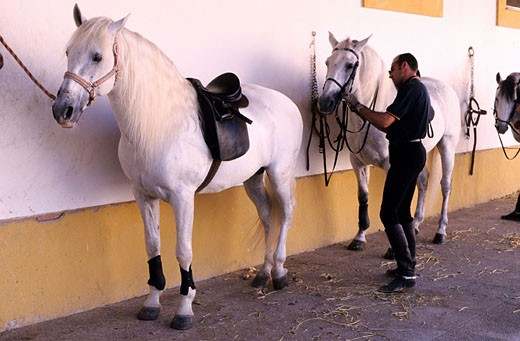 Stock Photo: 1792-56428 Spain, Andalusia, Jerez de la Frontera, the Royal Equestrian School