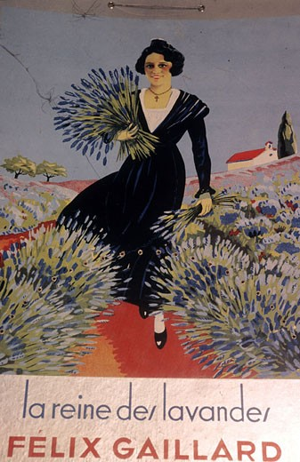 France, Vaucluse (84), Sault village, old poster of lavender : Stock Photo