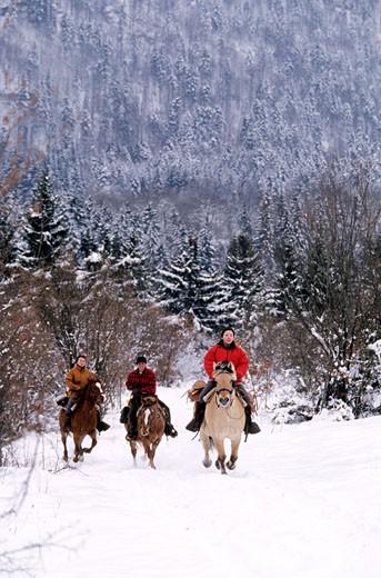 France, Jura (39), region of the Quatre Lacs, equestrian tourism in winter : Stock Photo