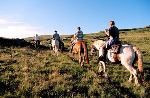 France, Puy de Dome, equestrian tourism in Sancy massif : Stock Photo