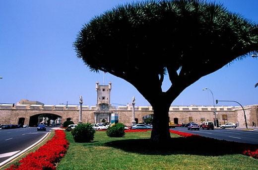 Spain, Costa de la Luz, Cadiz, a tree in Plaza square de la Constitution, before the Càdiz remparts : Stock Photo