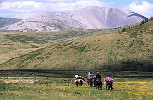 Mongolia, Khovsgol Province, hike with saddle horses to Khovsgol Lake : Stock Photo