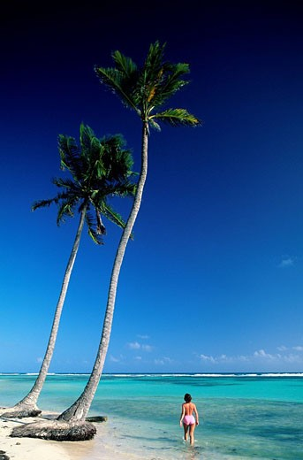 France, Guadeloupe French West Indies, Grande_Terre, beach of Bois_Jolan east of Saint Anne : Stock Photo