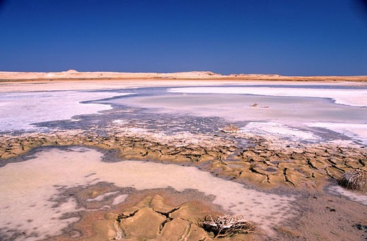 Egypt, Sinaï, the Salted Lake of the national park of Ras Mohammed : Stock Photo