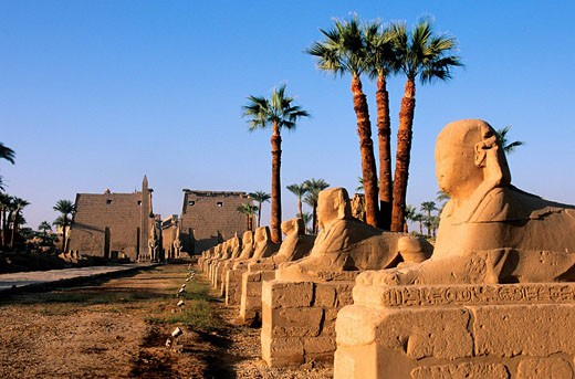 Egypt, Nile Valley, Luxor, the temple : Stock Photo