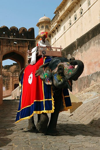 India, Rajasthan State, Jaipur, Amber Fort, cornac riding an elephant : Stock Photo