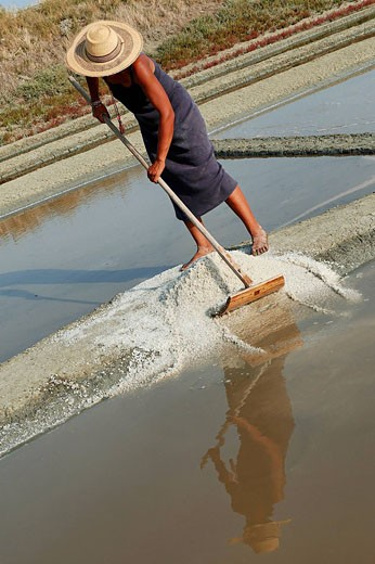 France, Charente Maritime, Ile de Re, marsh of Le Fier d´Ars, collecting salt in the salt marshes : Stock Photo