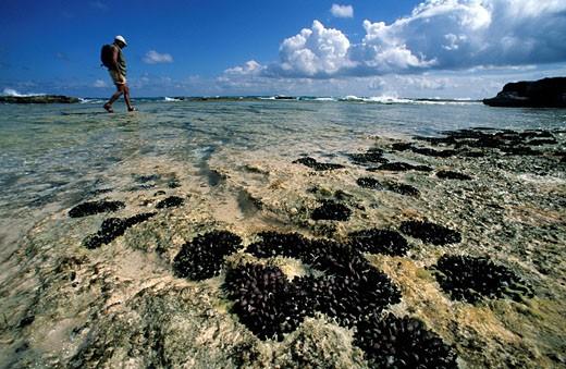Bahamas, Long Island, walking in beach,beaches, mussels : Stock Photo