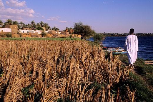 Egypt, Nile Valley, Wadi Hamman village : Stock Photo