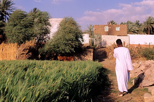 Egypt, Nile Valley, Wadi Hamman village : Stock Photo