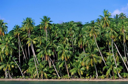 Stock Photo: 1792-72237 France, French Polynesia, Society archipelago, Leeward islands, Bora_Bora