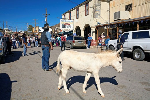 Stock Photo: 1792-73456 United States, Arizona, Route 66, Oatman, tradition lets donkeys freely circulate in the city