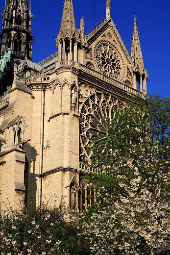 France, Paris, Notre Dame de Paris cathedral in the spring : Stock Photo