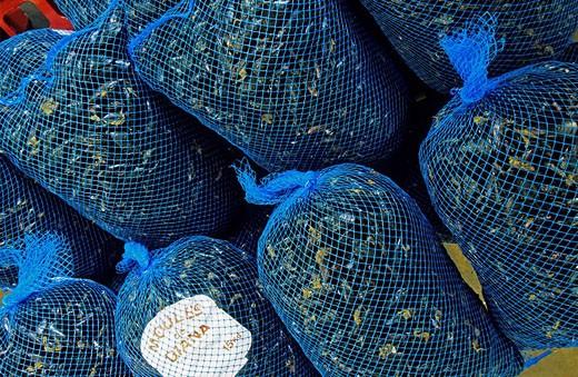 Stock Photo: 1792-75849 France, Haute Corse, East coast, north of Aleria, Etang de Diane Diane Pool, production of the mussel, Etang de Diane company
