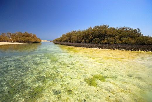 Egypt, Sinai, mangroves of Ras Mohammed national park : Stock Photo