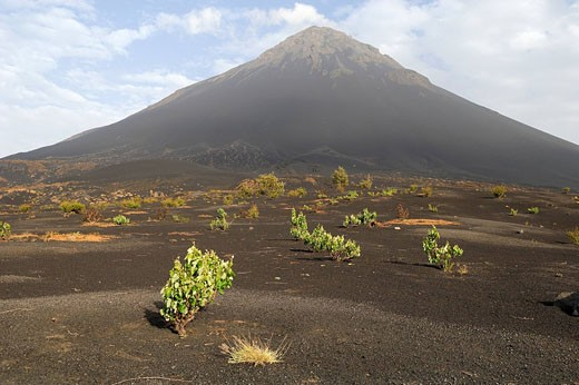 Stock Photo: 1792-77165 Cape Verde, Fogo Island, Pico Volcano 9 281,50 ft, vineyard in caldera lava