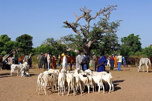 Senegal, Gueguenne, market in bush : Stock Photo