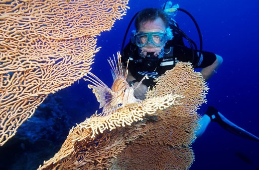 Stock Photo: 1792-80519 Egypt, Red Sea, lionfish in gorgonian or sea fan