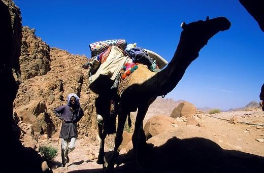 Stock Photo: 1792-89611 Egypt, Sinai Peninsula, near Saint Catherine, bedouin