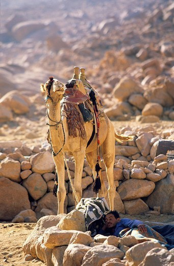 Egypt, Sinai Peninsula, Saint Catherine, Djebal Valley, bedouin : Stock Photo