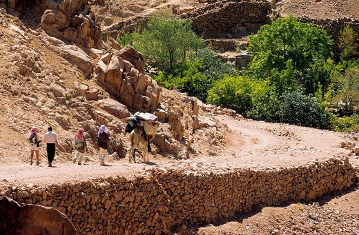 Egypt, Sinai Peninsula, Saint Catherine, Djebal Valley : Stock Photo