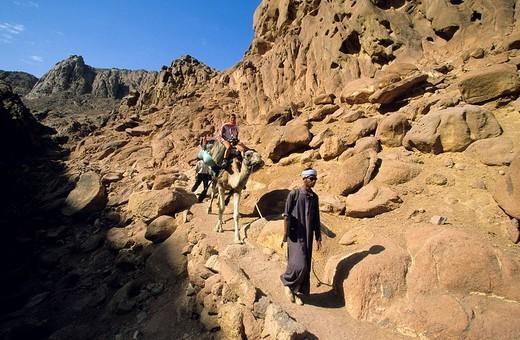 Stock Photo: 1792-89621 Egypt, Sinai Peninsula, Saint Catherine, Djebal Valley