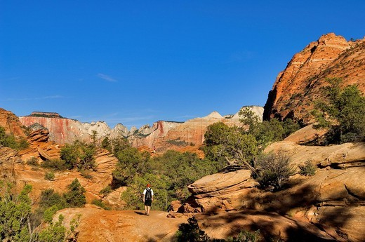 United States, Utah, Zion National Park : Stock Photo