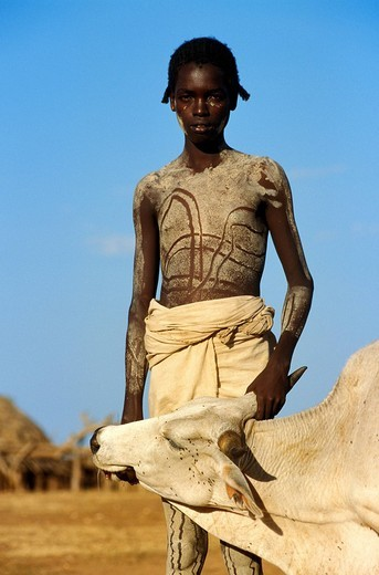 Ethiopia, Lower Omo Valley, listed as World Heritage by UNESCO, young Hamer with his bull : Stock Photo