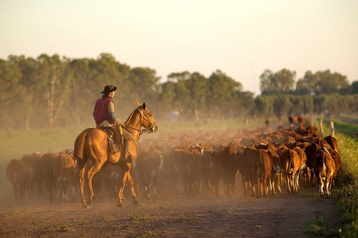 Argentina, Buenos Aires Province, Estancia San Isidro del Llano, gaucho : Stock Photo