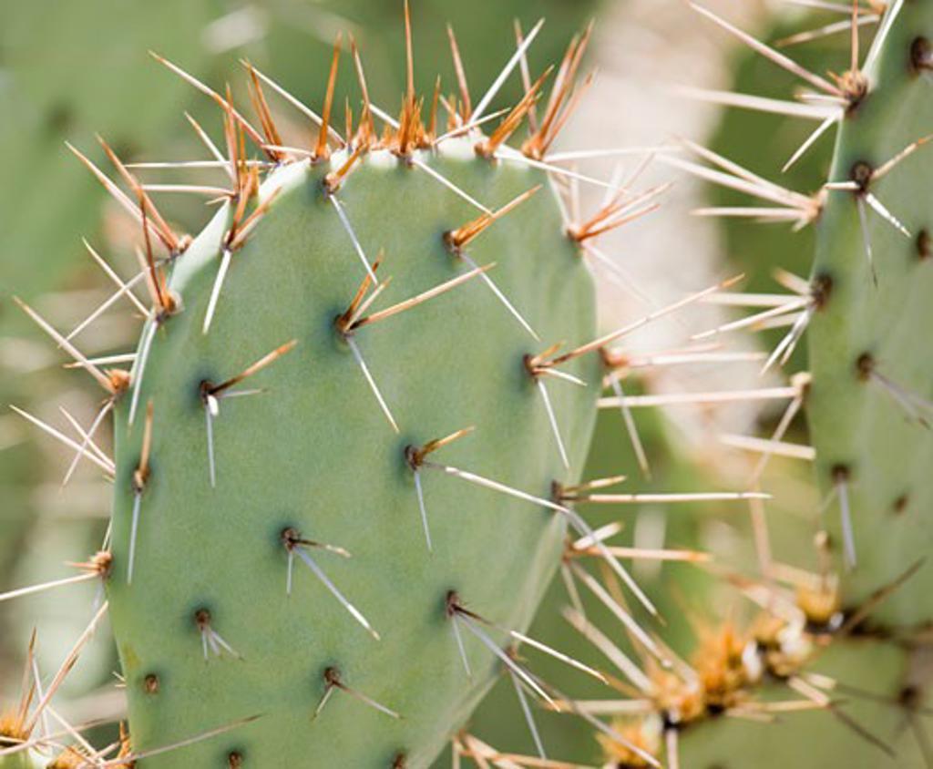 Close up of cactus, Arizona, United States : Stock Photo