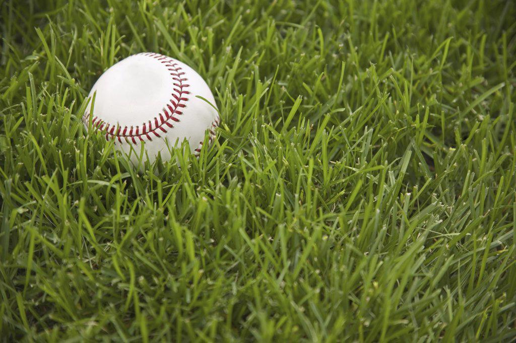 Baseball laying on grass : Stock Photo