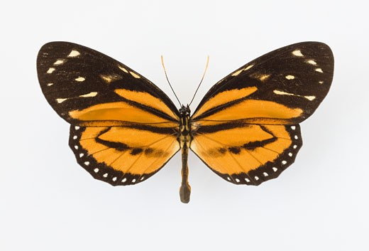 Stock Photo: 1795R-15706 Close up of butterfly