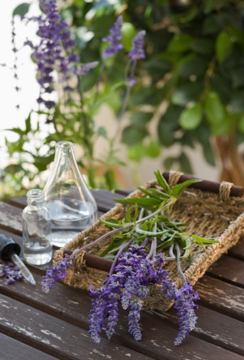 Lavender and lavender oil : Stock Photo