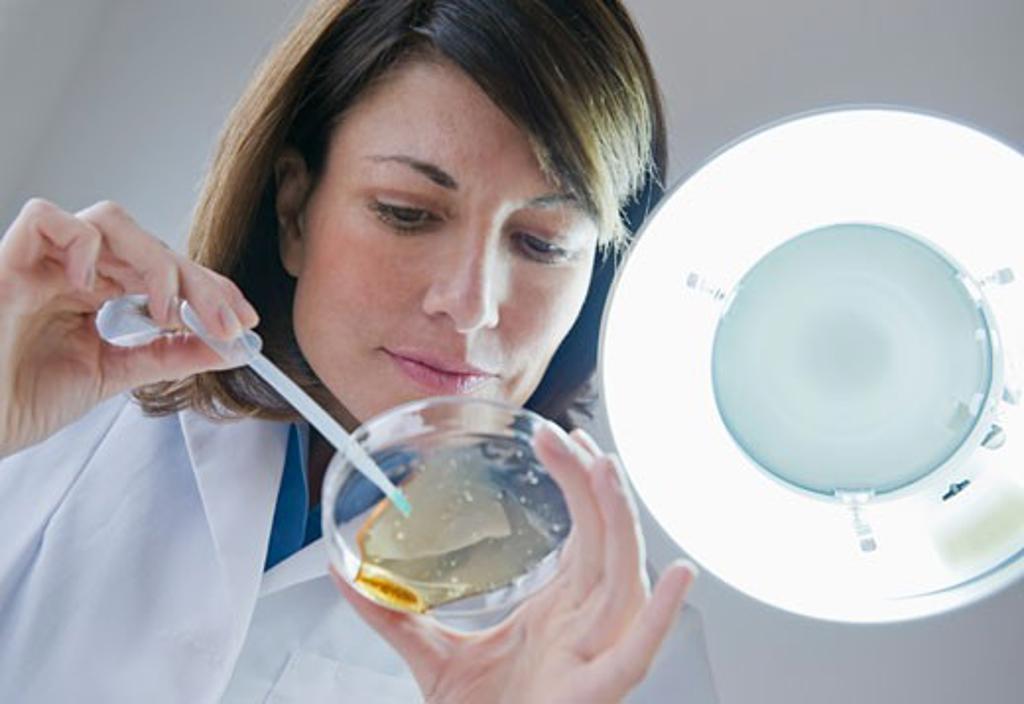 Female scientist dropping liquid in petri dish : Stock Photo