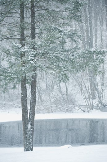Stock Photo: 1795R-19241 Forest and pond in winter