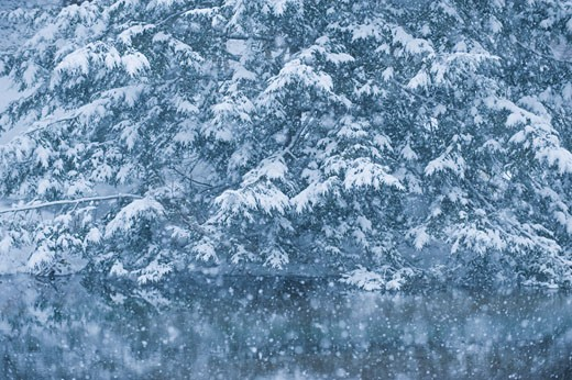 Forest and pond in winter : Stock Photo