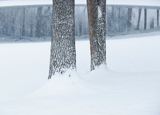 Stock Photo: 1795R-19249 Trees in winter