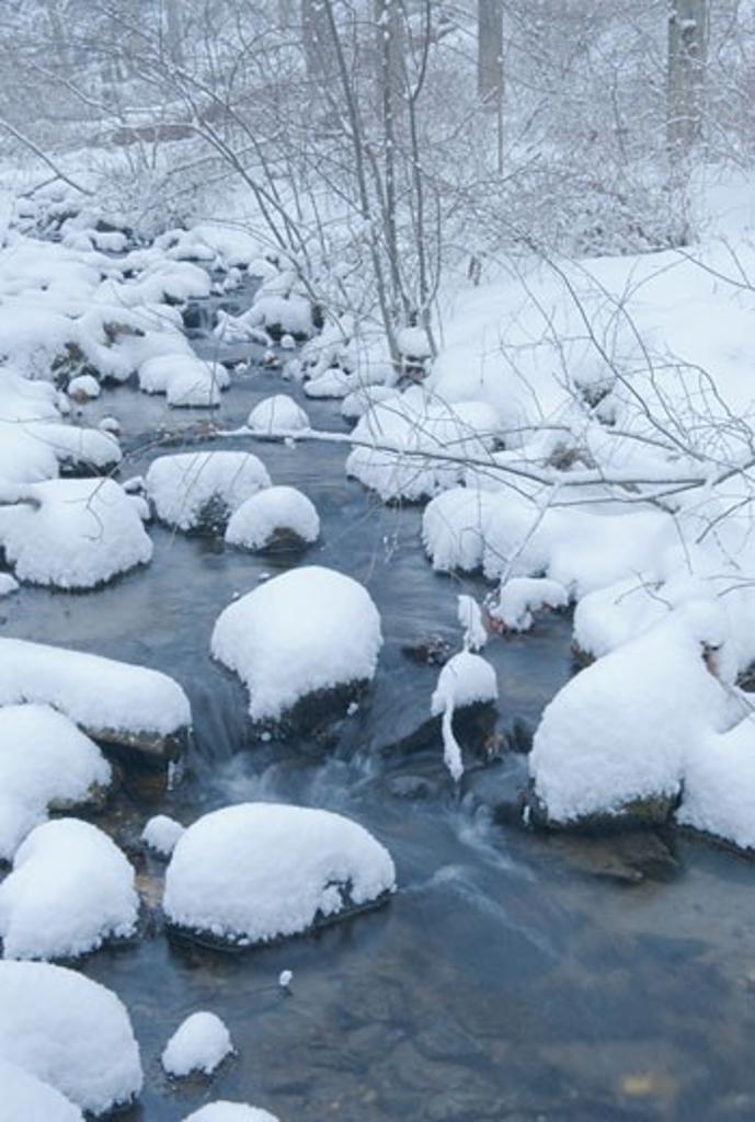 Snowy stream in winter : Stock Photo