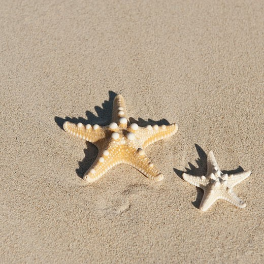 Starfish in sand : Stock Photo