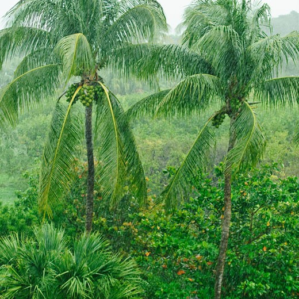 Stock Photo: 1795R-19715 Tropical rainforest